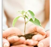 両手の中にある新芽